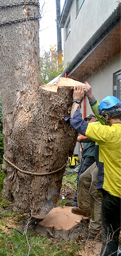 Large Complex Tree Removals