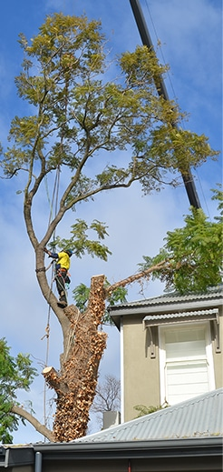 Height Reductions & Remedial Pruning