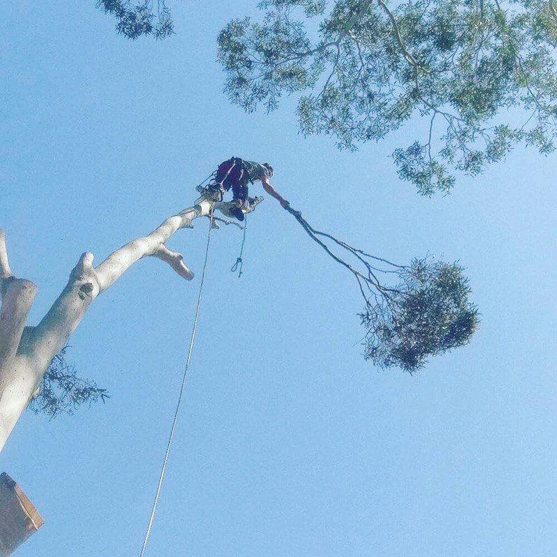 Complex Tree Lopping in Perth