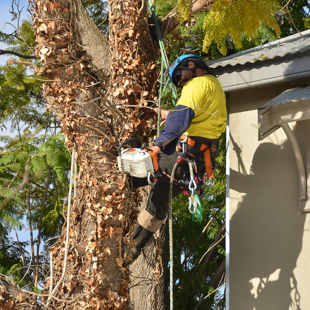 Professional Tree Lopping
