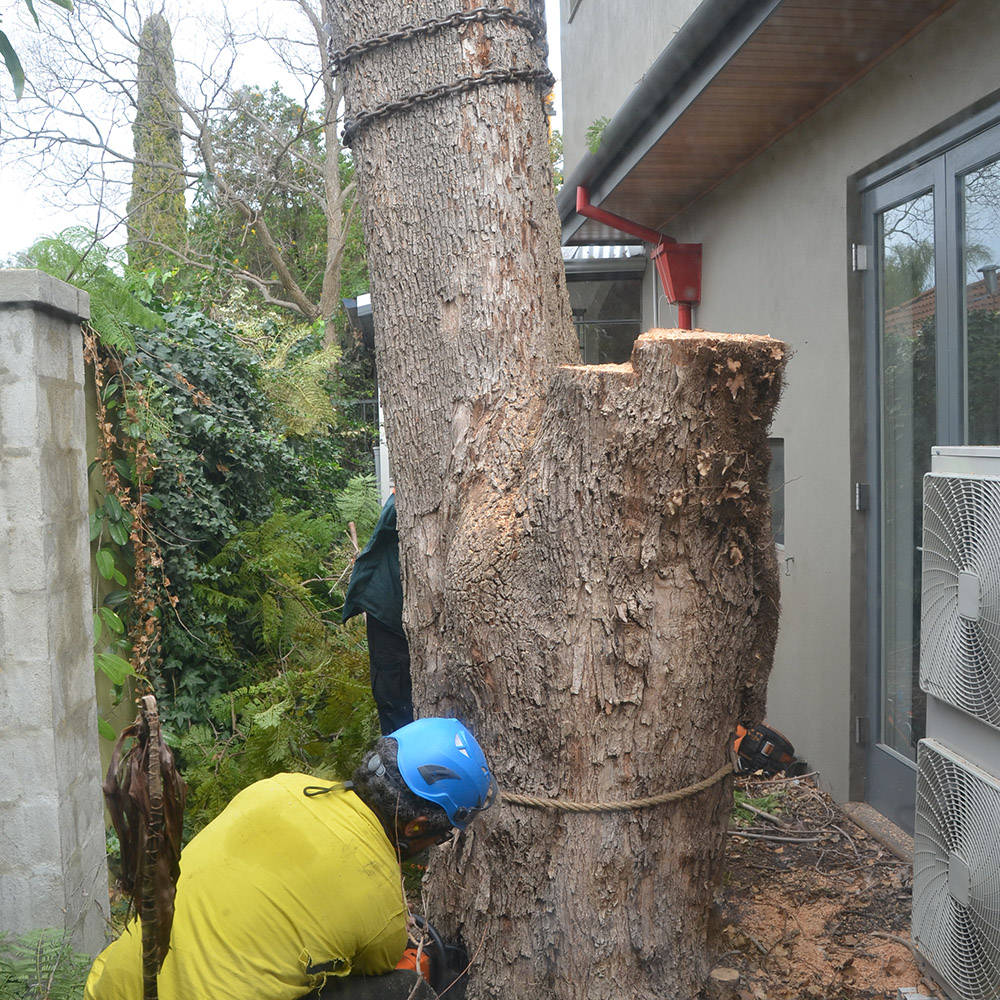 Tree Removal Perth